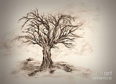 Tree Abstracts Drawing - Enchanted 3 by John Krakora