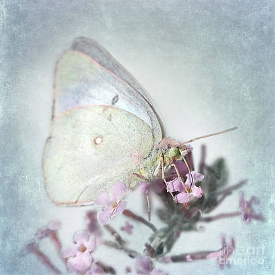 Colias Philodice Photograph - Enchanted by Betty LaRue