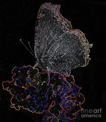 Photograph - Enchanted Butterfly by Steven Parker