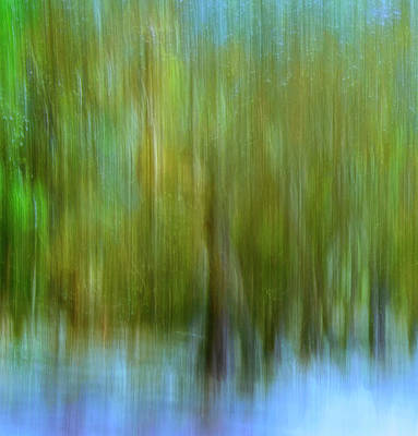 Photograph - Enchanted Cypress Forest by Carol Eade