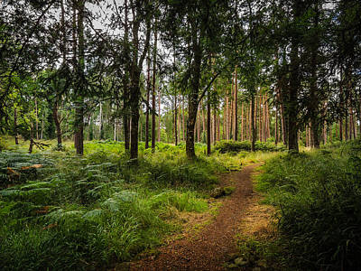 Photograph - Enchanted Forest At County Galway's Portumna Park by James Truett