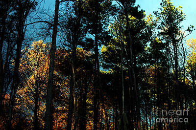 Photograph - Enchanted Forest by Clayton Bruster