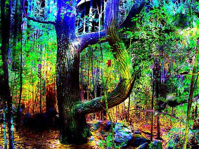 Digital Art - Enchanted Forest by Cliff Wilson