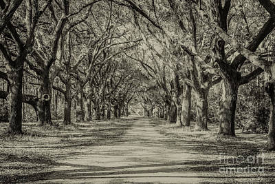 Photograph - Enchanted Forest by Dale Powell
