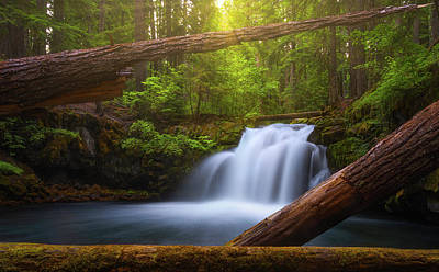 Photograph - Enchanted Forest by Darren White