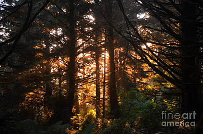 Photograph - Enchanted Forest by Frank Larkin
