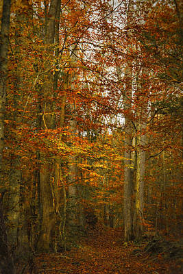 Photograph - Enchanted Forest by Shari Jardina