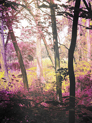Photograph - Enchanted Forest by Shawna Rowe
