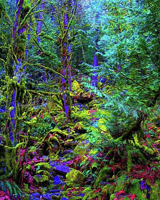 Harrison Hot Springs Wall Art - Photograph - Enchanted Forest by Sheryl R Smith