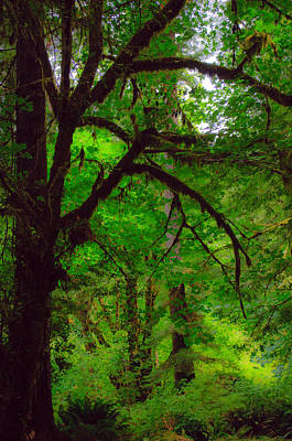 Photograph - Enchanted Forest by Tikvah's Hope