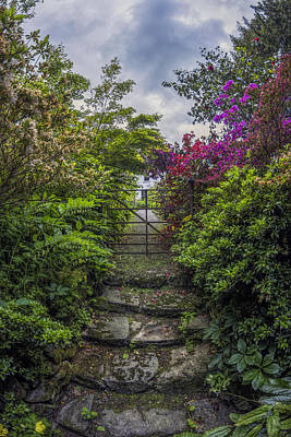 Photograph - Enchanted Garden by Ian Mitchell