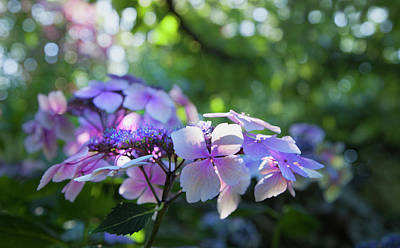 Photograph - Enchanted Hydrangea by Theresa Tahara