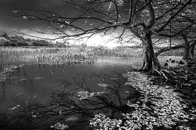 Photograph - Enchanted In Black And White by Debra and Dave Vanderlaan