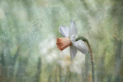 Photograph - Enchanted In The Garden by Kim Hojnacki