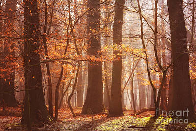 Hjbh Photograph - Enchanted Light... by LHJB Photography