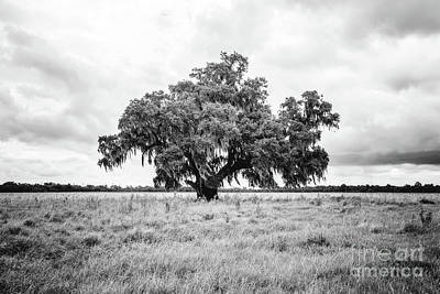 Enchanted Oak - Bw Art Print