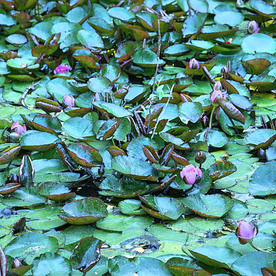 Photograph - Painted Water Lilies by Theresa Tahara