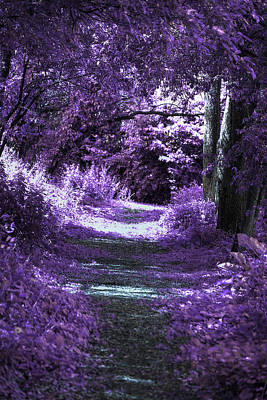 Enchanted Way Art Print by Lorelei Bleil
