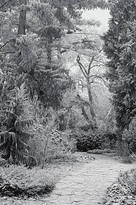 Photograph - Enchanted Winter Garden. Black And White by Jenny Rainbow