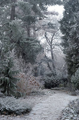 Photograph - Enchanted Winter Garden by Jenny Rainbow