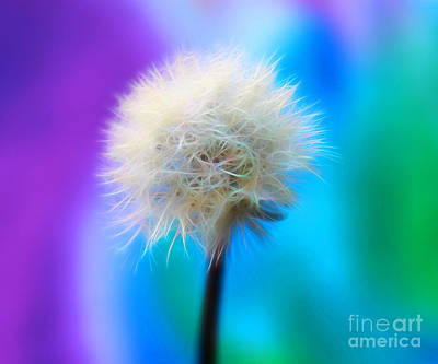 White Flower Photograph - Enchanted Wishes by Krissy Katsimbras