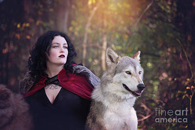 Photograph - Enchanted Wolf Encounter by Sharon McConnell
