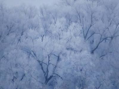 Photograph - Enchanted Woodland by Lori Frisch