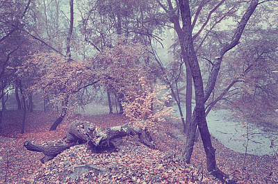 Photograph - Enchanted Woods. Blue Light by Jenny Rainbow