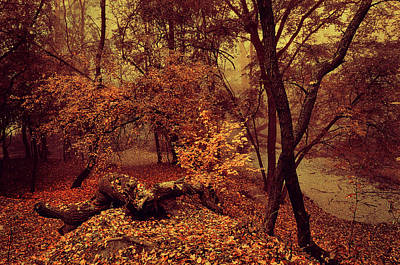 Photograph - Enchanted Woods by Jenny Rainbow