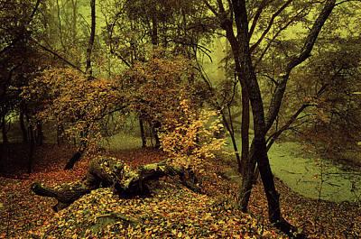 Photograph - Enchanted Woods. Moon Light by Jenny Rainbow