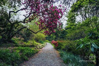Photograph - Enchanting Garden by Ian Mitchell
