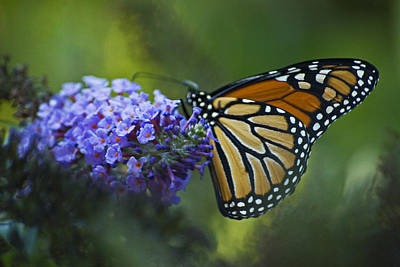 Art Print featuring the photograph Enchanting Monarch by Elsa Marie Santoro