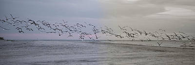 Obx Photograph - Encore by Betsy Knapp