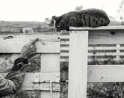 Farm Scenes Photograph - Encounter At The Gate by Ron  McGinnis