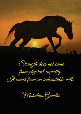Mahatma Gandhi Photograph - Encouragement Strength Horse In Sunset  by Stephanie Laird