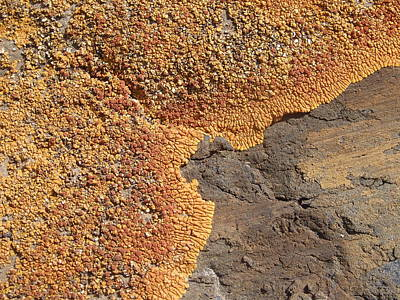 Photograph - Encroachment - Lichen On Volcanic Stone by Robert Schaelike