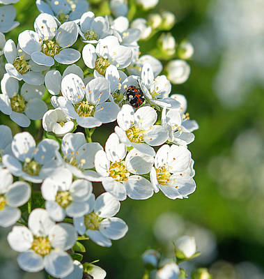 The Sakura Photograph - Encyclopedia Of Spring Image 14 by Irina Effa