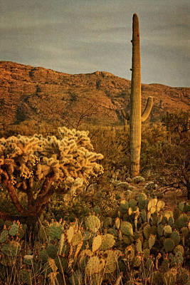 Photograph - End Of A Desert Day Tx by Theo O'Connor