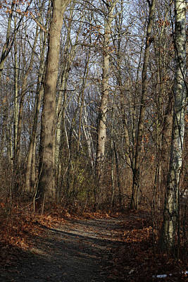 Photograph - End Of Fall Hiking Trail 120217 by Mary Bedy