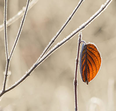 Photograph - End Of November by Angie Vogel