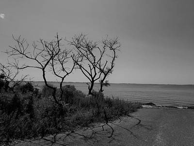 Photograph - End Of The Water Road Trees 1 B W by Rob Hans