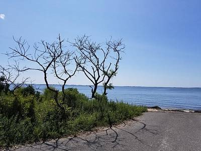 Photograph - End Of The Water Road Trees 1 by Rob Hans