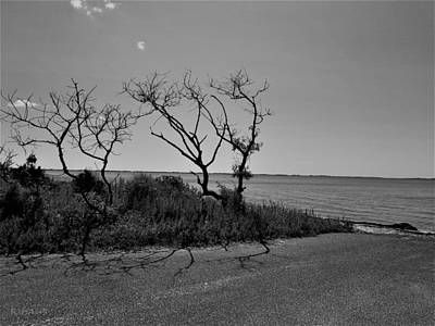 Photograph - End Of The Water Road Trees  B W by Rob Hans