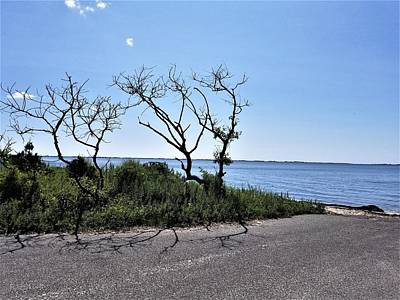 Photograph - End Of The Water Road Trees by Rob Hans