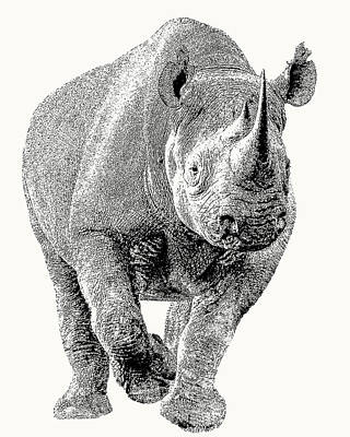 Photograph - Endangered Black Rhino, Full Figure by Scotch Macaskill