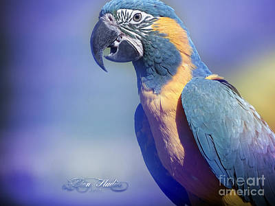 Photograph - Endangered Blue Throated Macaw by Melissa Messick