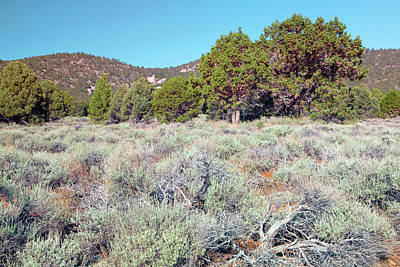 Photograph - Endangered Plant Habitat - Baldwin Lake Ecological Reserve California by Ram Vasudev