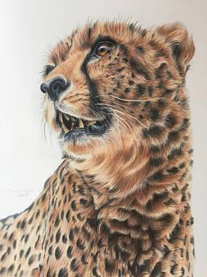 Cheetah Drawing - Endangered Snapshot by Taylor Ann