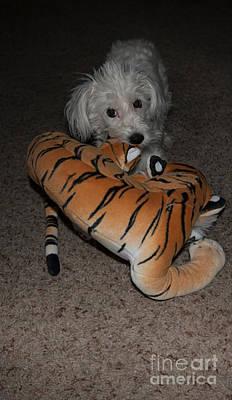 Endangered Tiger 2 Art Print by Anne Rodkin