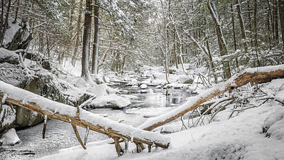 Connecticut Winter Photograph - Enders State Forest by Bill Wakeley